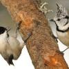 Eurobirdwatch, festa della migrazione!