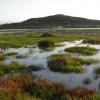 Photo Contest le zone umide nella piana di gela